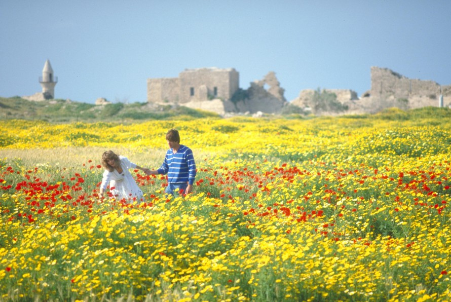 Spring flowers at the old city of Caesarea